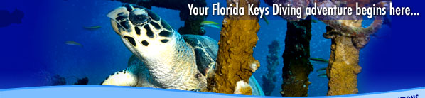 Florida Keys Dive Center - Your Florida Keys Diving adventure begins here!