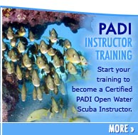 PADI Instrutor Cources In the florida keys